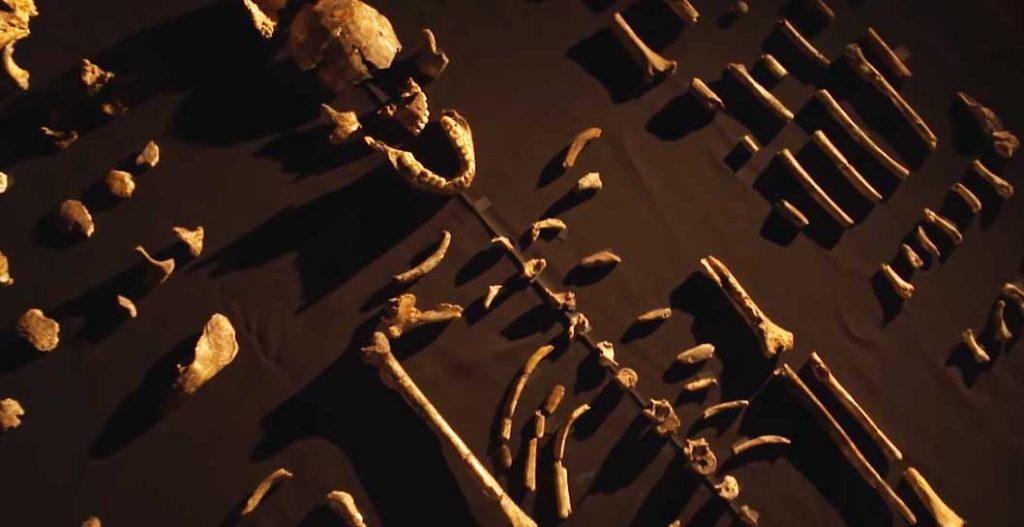 resti-scheletro-lucy