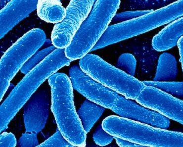 batteri-virus